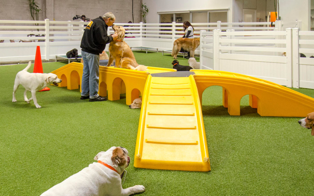 ForeverLawn Issued Patent for K9Grass Flushing System